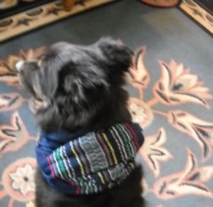Layla on carpet at cottage